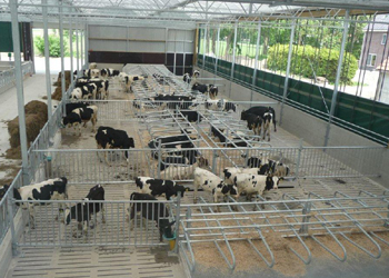 Leenknecht Agri, Royal De Boer GEA Young Stock Solutions
